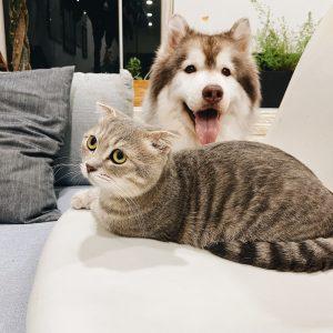Mancare de caini/pisici